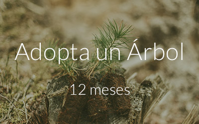 adopta un arbol subscripcion web